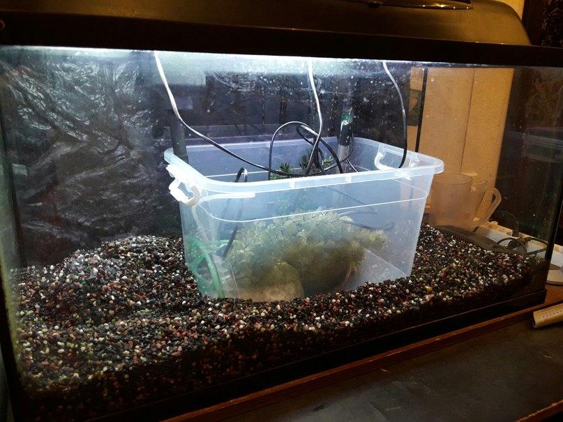 Продам аквариум недорого